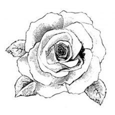 FF409D Bella Rose Med