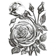 CFF127F Botanical Cabbage Rose Rubber Stamp