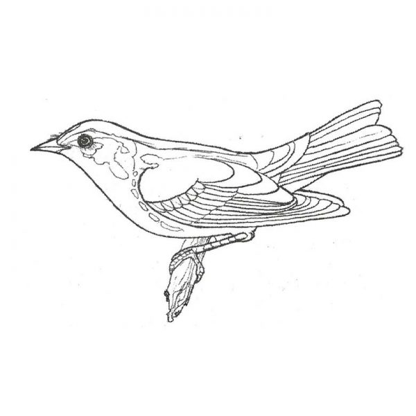 CFF413E Warbler Rubber Stamp