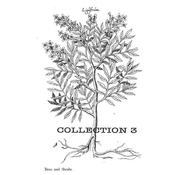 CFF601E Collection 3 Rubber Stamp