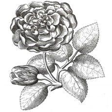 CFF609E Garden Rose Rubber Stamp