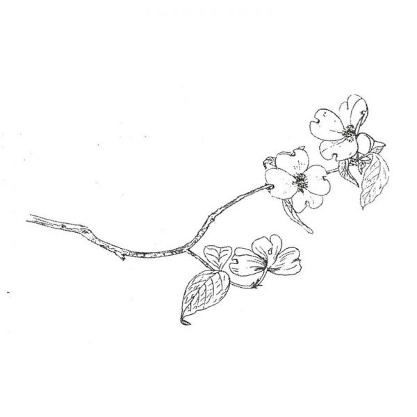 CFF710E Flowering Branch Rubber Stamp