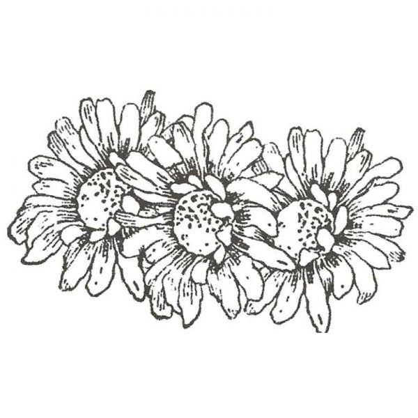 CFF333D Daisy Trio Rubber Stamp