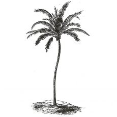 CFF512D Swaying Palm Rubber Stamp