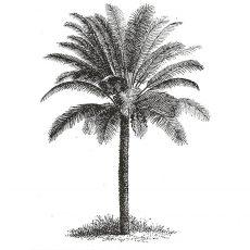 CFF513E Palm Rubber Stamp
