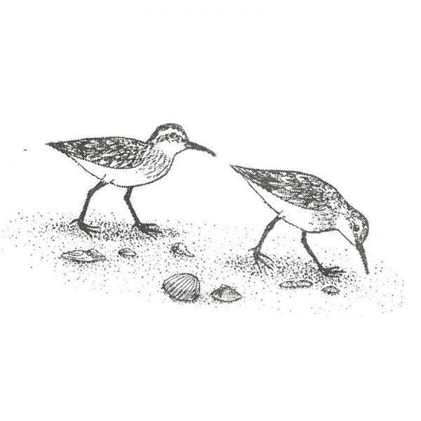 CNA233D Sandpipers Rubber Stamp