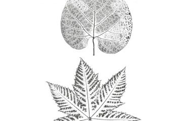 CFF2460G Pressed Leaf Duo Rubber Stamps