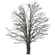 CFF249F Tree Silhouette Rubber Stamp
