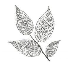 CFF625D Skeleton Leaf Rubber Stamp