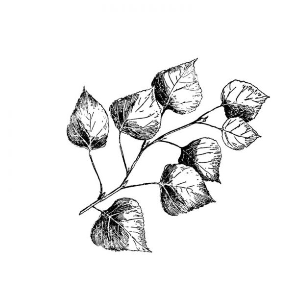 CFF720F Leafy Branch Rubber Stamp