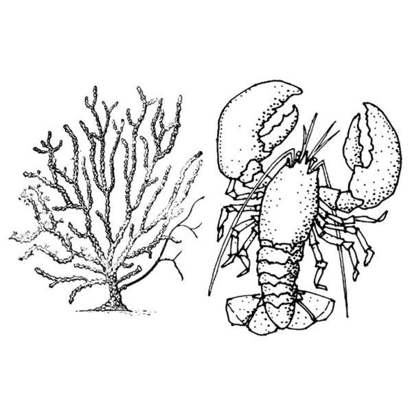 CNA223E Lobster Sea Fan Duo Rubber Stamps
