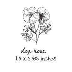 AP215C Dog-Rose Rubber Stamps