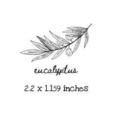 AP221C Eucalyptus Rubber Stamps